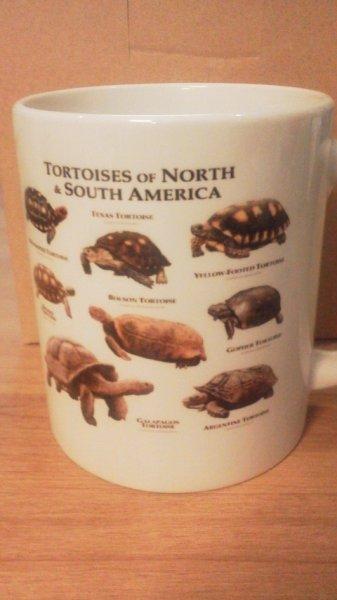 画像1: オリジナルマグカップ(アメリカ大陸のリクガメ&ミズガメ) (1)