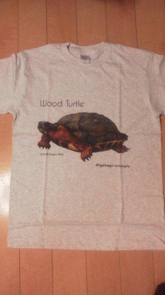 画像1: オリジナルTシャツ(Roger Hall モリイシガメ) (1)