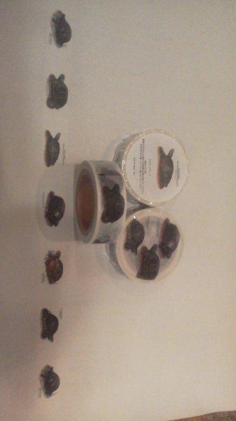画像1: オリジナルマスキングテープ(北米のカメたち) (1)